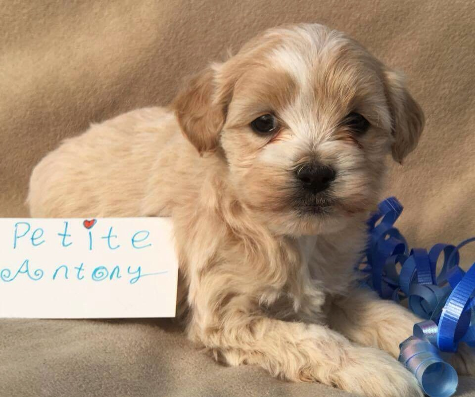 Antony boy Petite Anthony is reserved for Anthony in  Massapequa NY