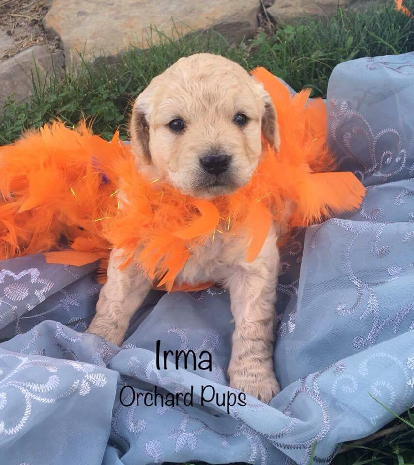 Irma girl~Angela from RI RESERVED