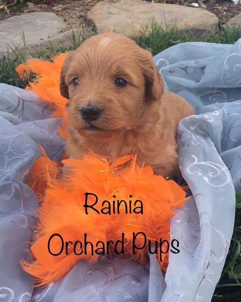 Raina girl