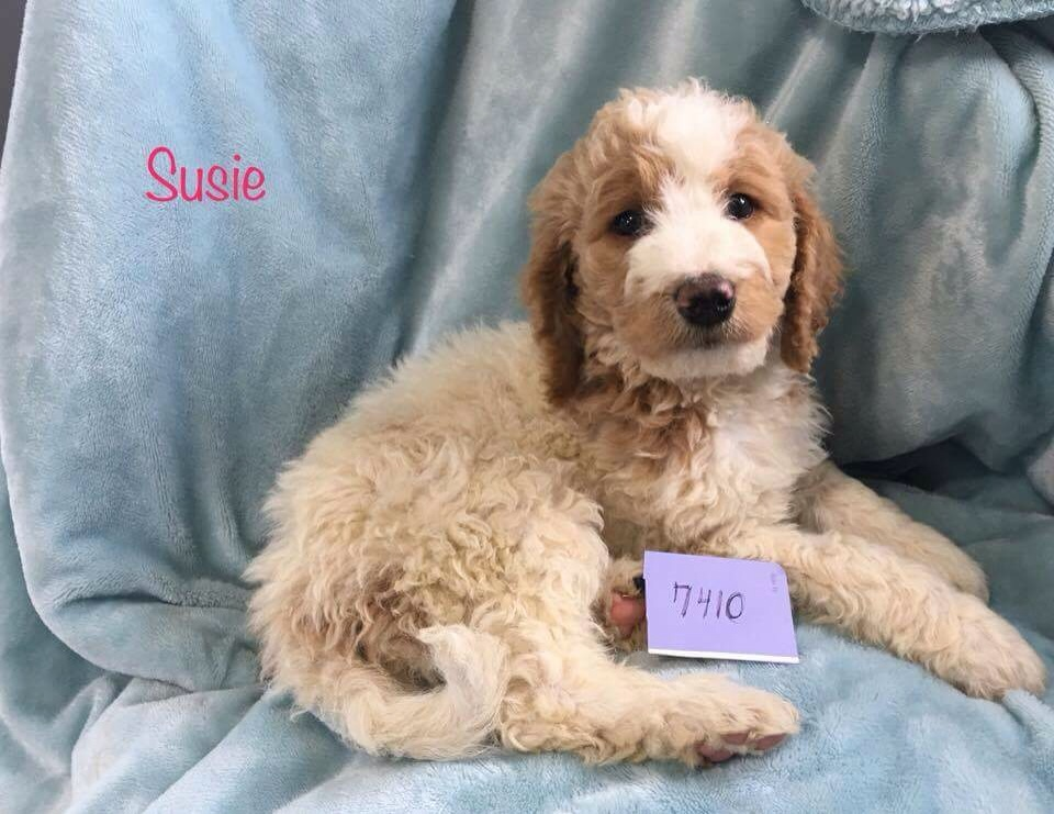 Susie is now Available!