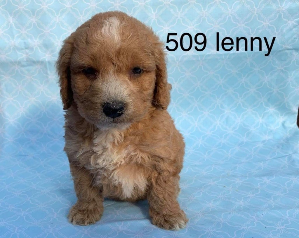 Lenny is Reserved for Amy