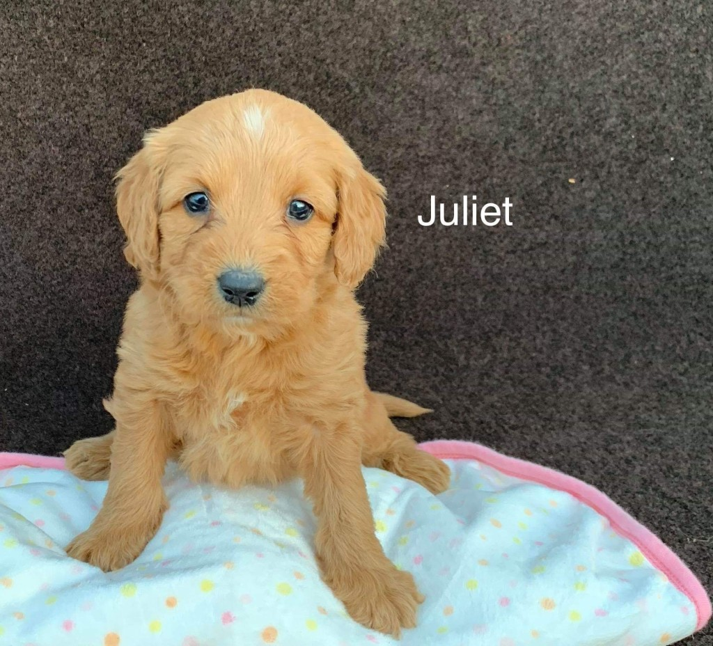 Smith reserved Juliet