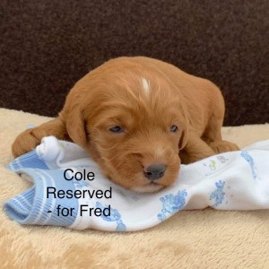 Cole is Reserved for Fred