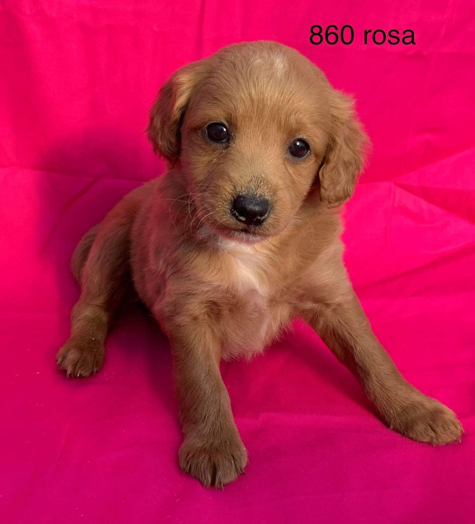 Rosa is Reserved for Lisa