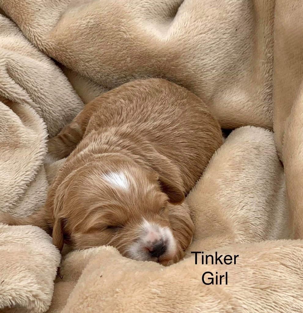 Zachery reserved Tinker