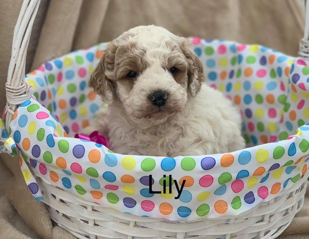 Charles reserved Lilly girl