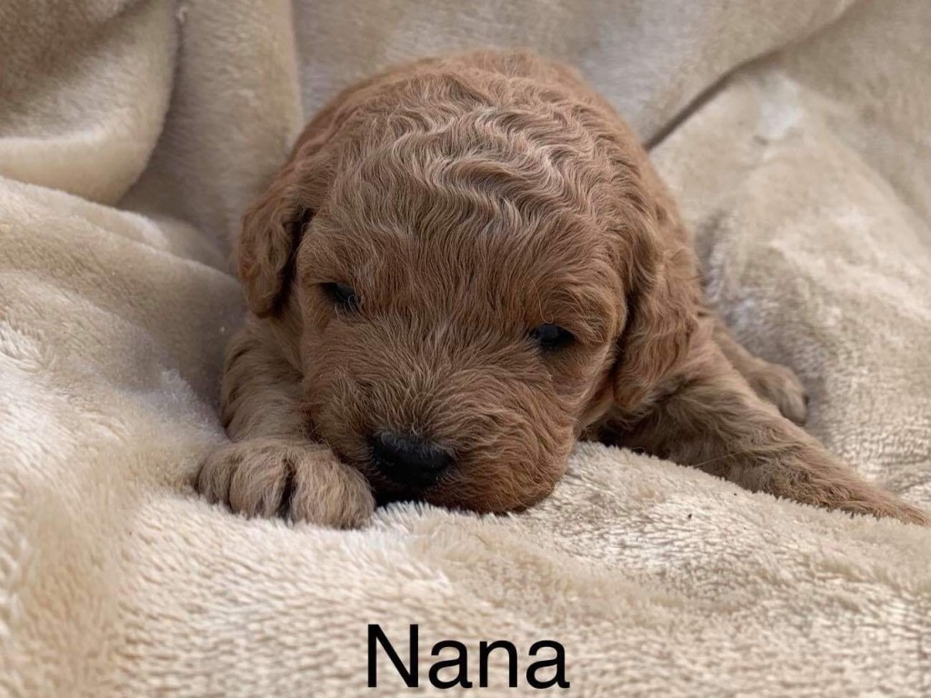 Dane Reserved  Nana