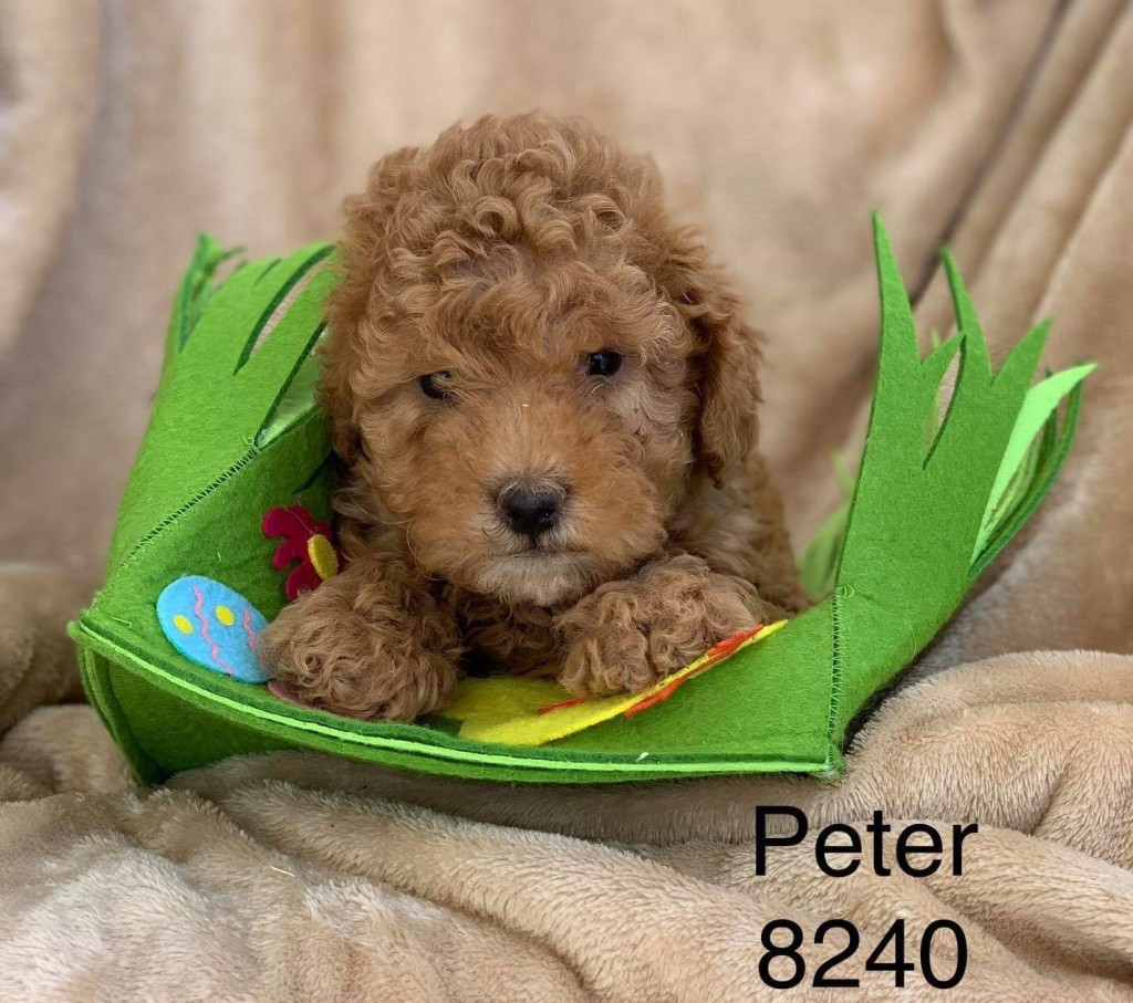 Kelly reserved Peter