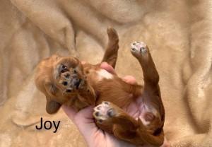 Sue reserved  Joy