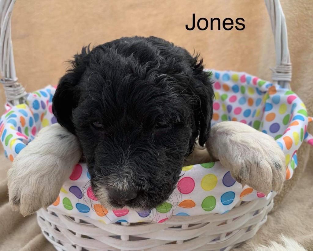 Zachary reserved Jones