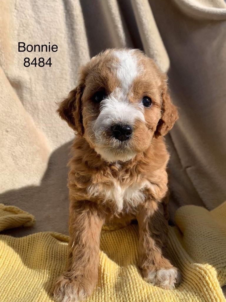 Casey reserved Bonnie