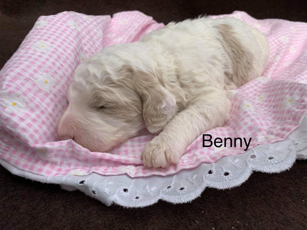 Christine reserved Benny