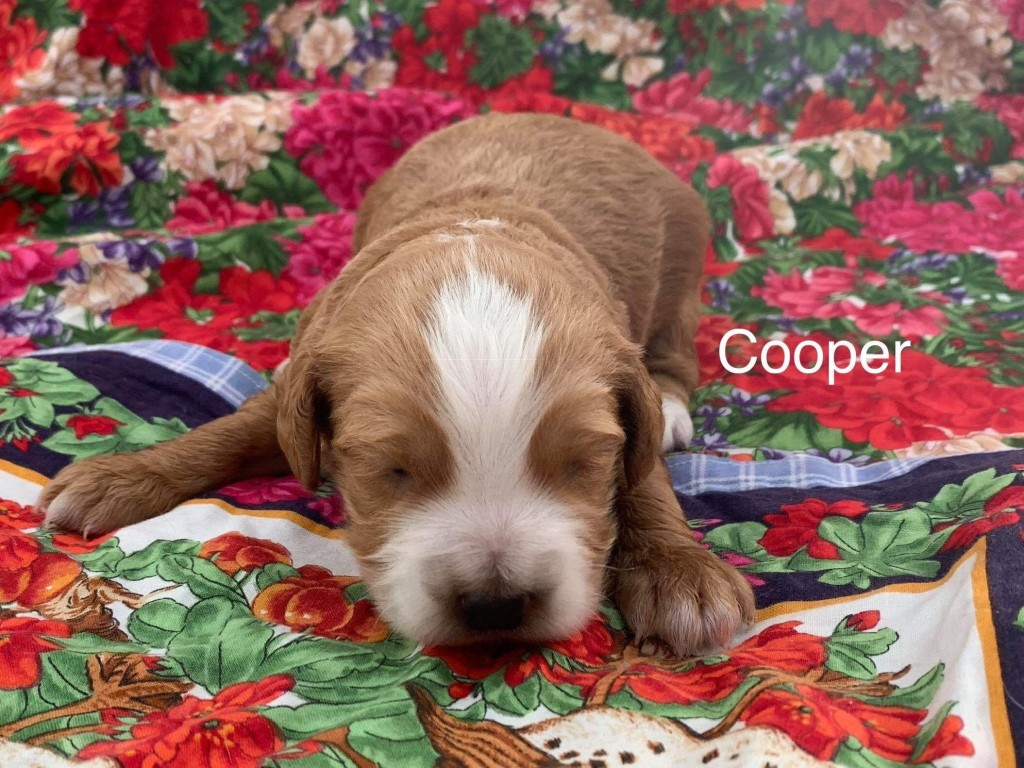 Andrew reserved Cooper