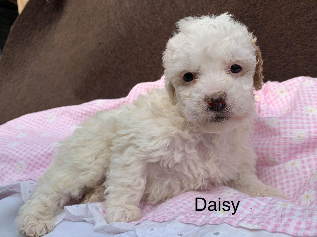 Renee reserved Daisy