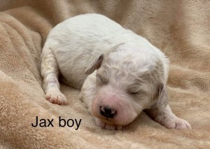 Jax is reaerved for Kyle