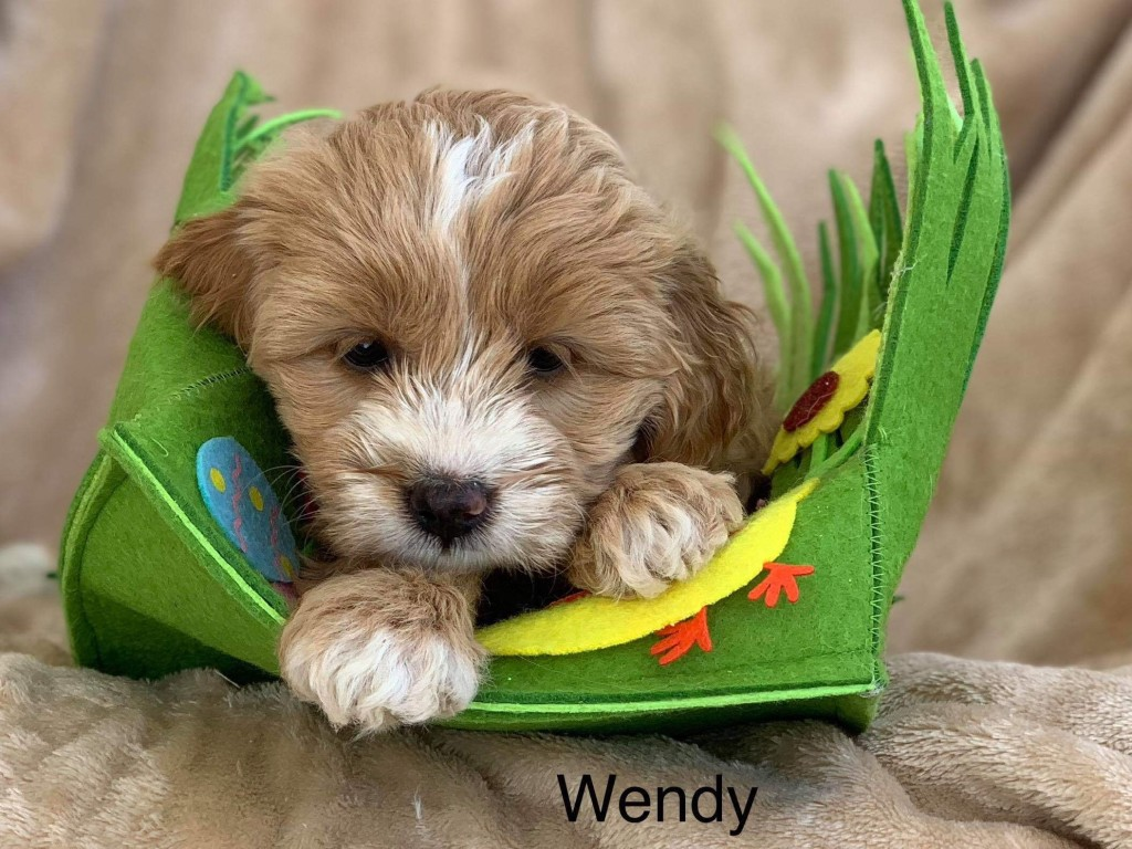 Wendy is reserved for AMY