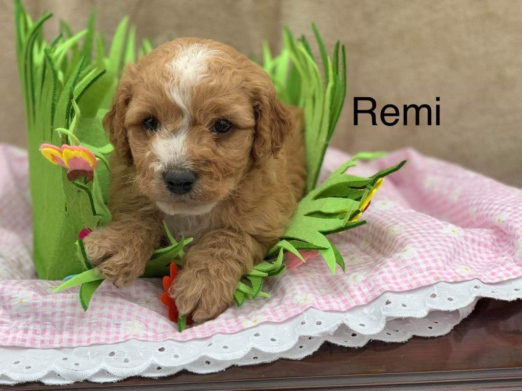 Remi is Reserved for Patricia