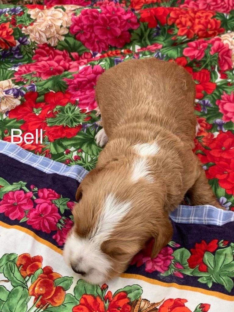 Leslie reserved  Bell