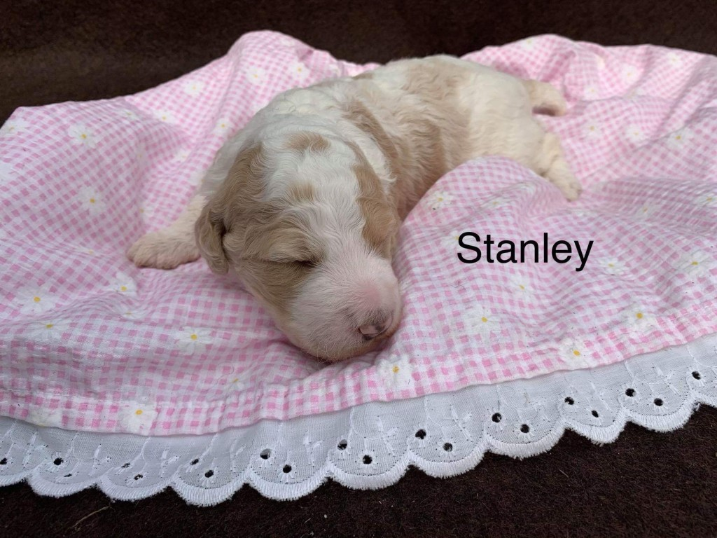 Stanley is reserved for Janet