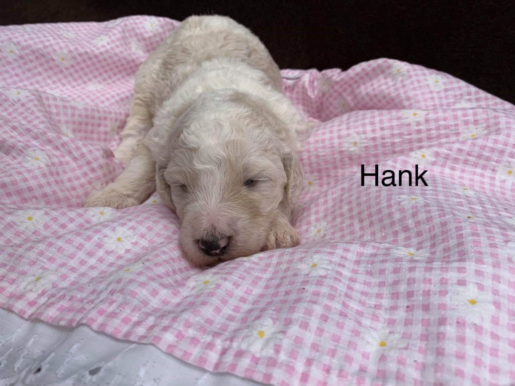 Hank is reserved for Kay