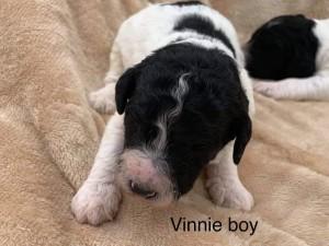 Neil Reserved Vinnie
