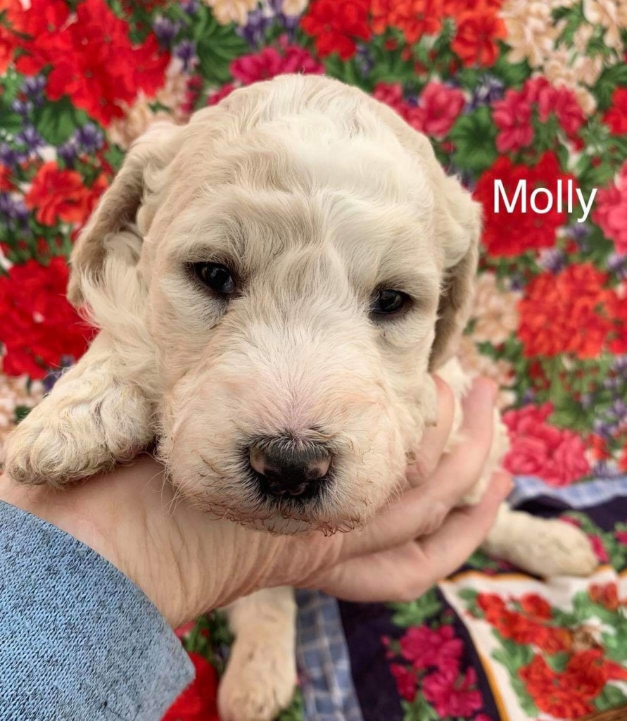 Molly is reserved for Bonnie