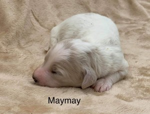Tammy reserved MayMay