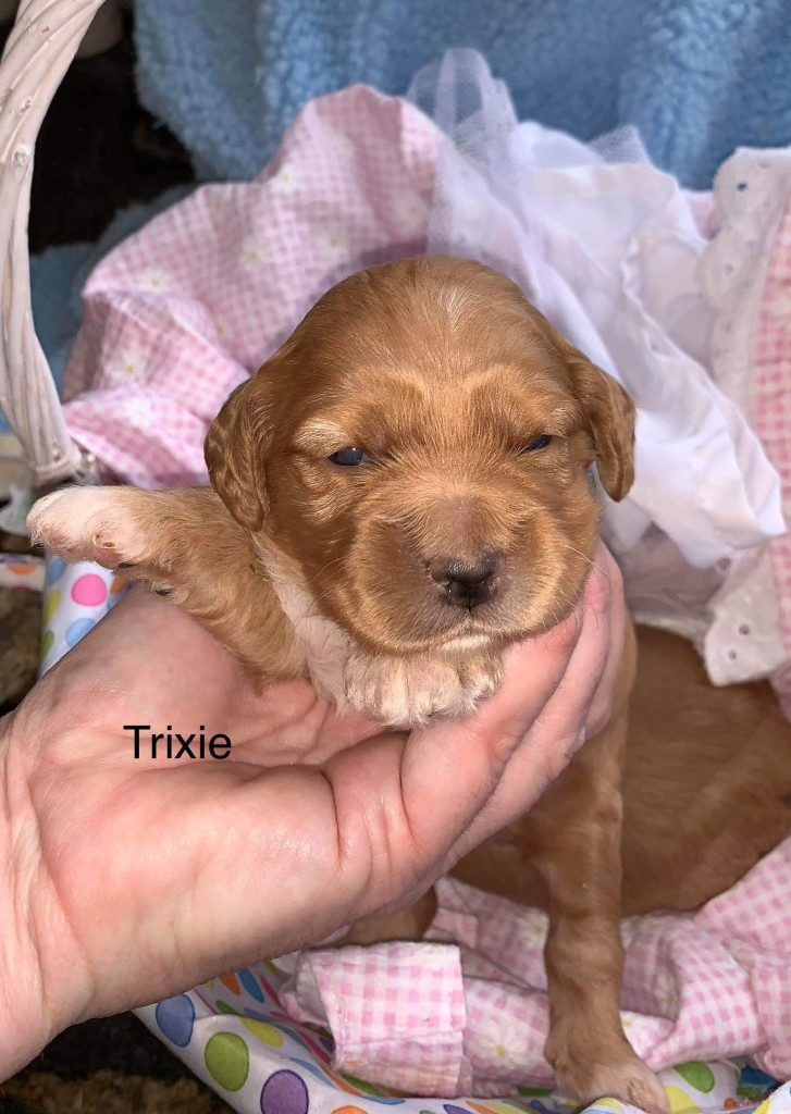 Kyle reserved Trixie.
