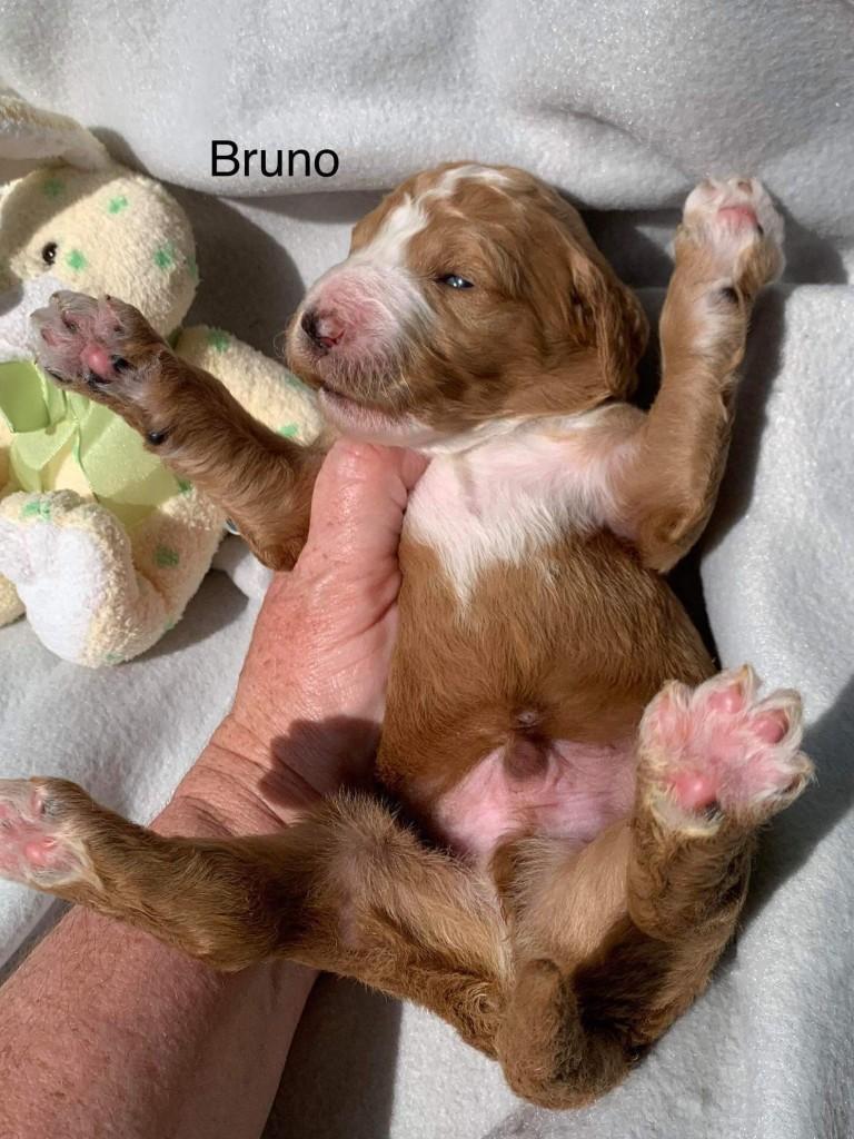 Ari reserved Bruno