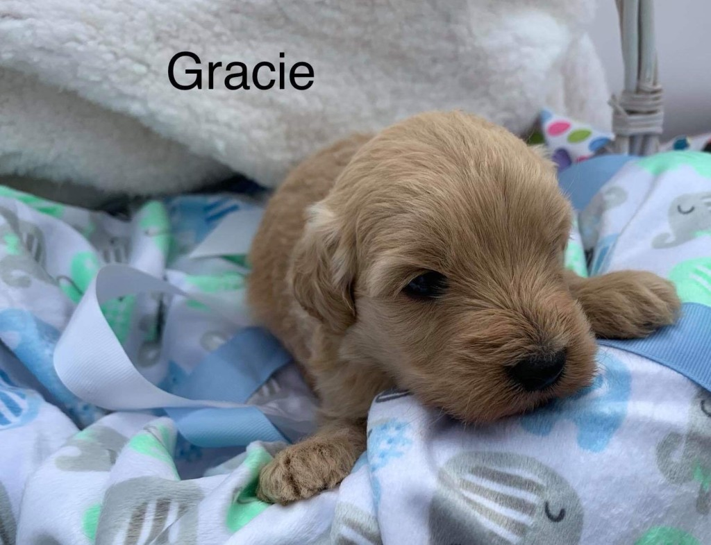 Howard Reserved Gracie
