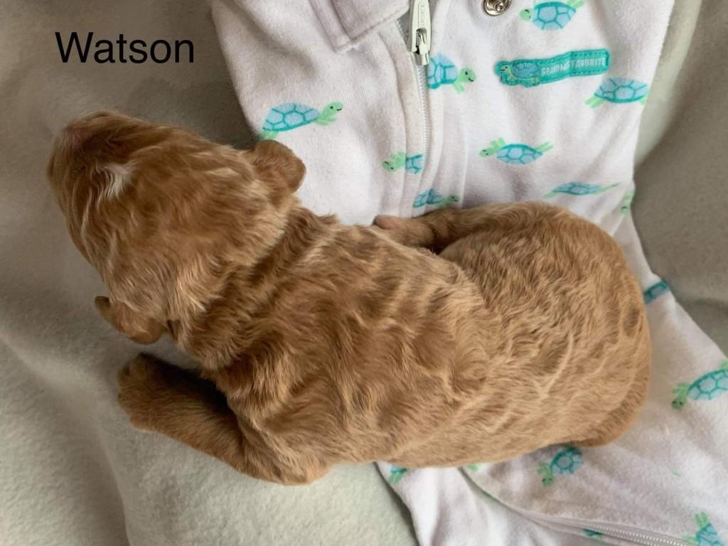 Kristyn Reserved Watson