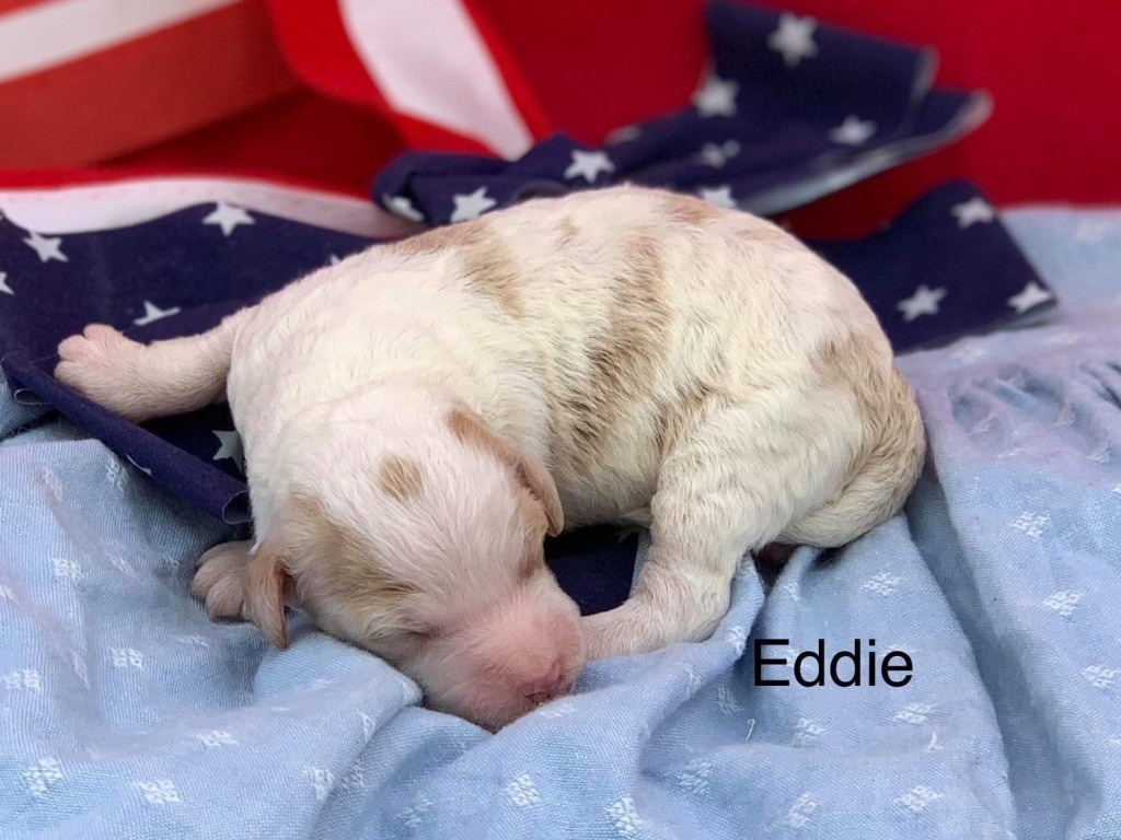 Jan Reserved Eddy