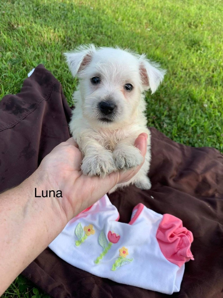 Luna is Reserved for Marilyn