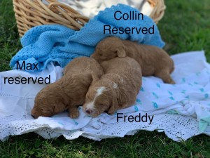 Freddy is Reserved for Noah