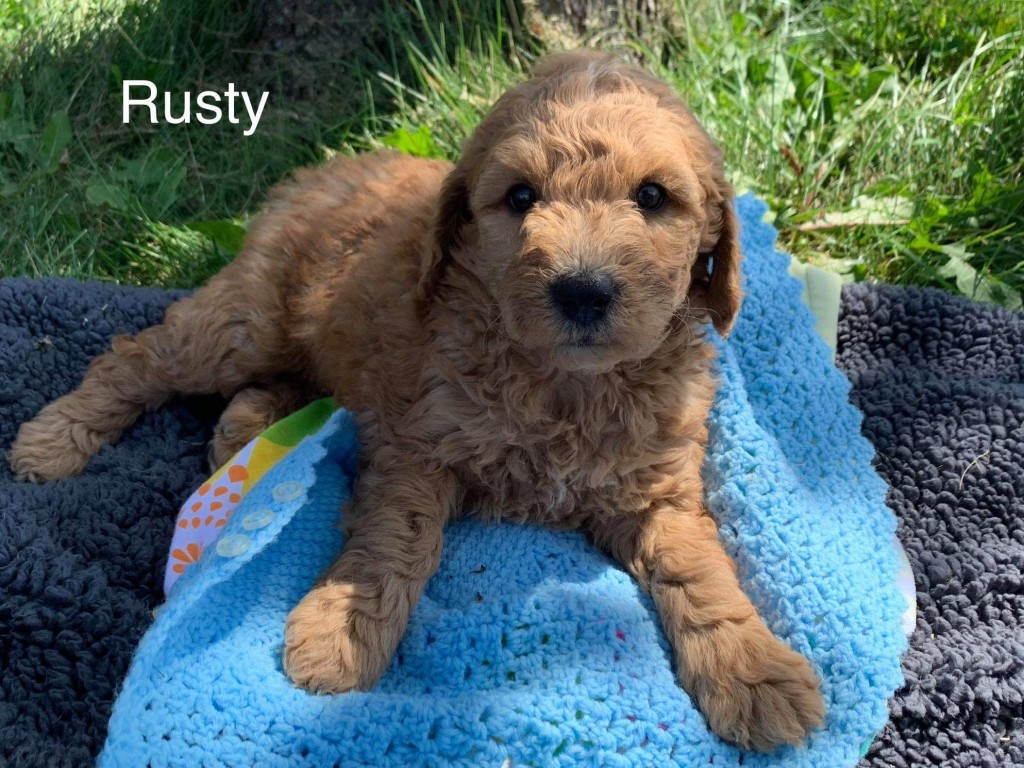 Kelsey reserved Rusty