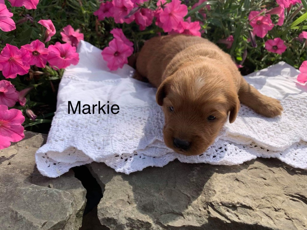 Laura Reserved Markie