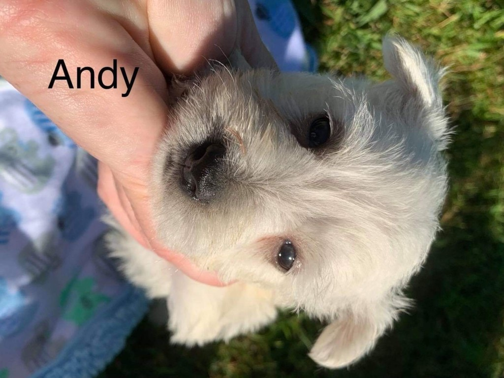 Andy is Reserved for Phyllis