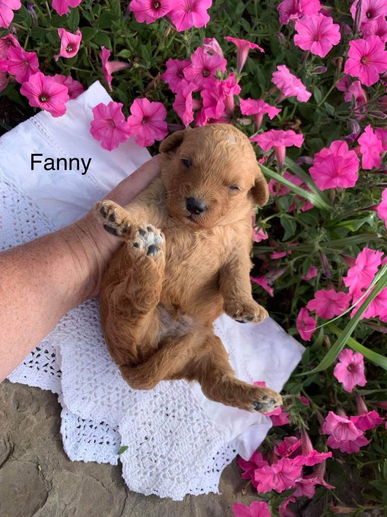 Kelly Reserved Fanny
