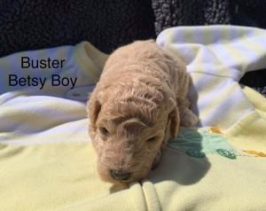 Kristin reserved Buster 8318