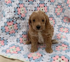 Rebecca reserved DENNY 8291