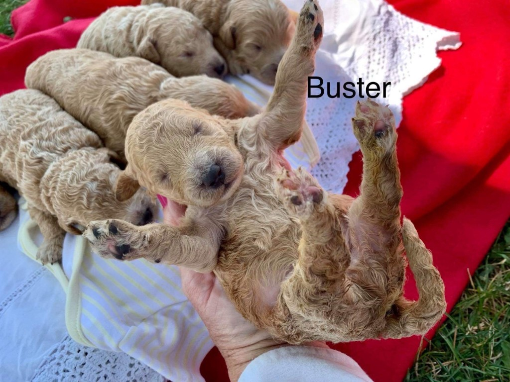 Kristin reserved Buster 8318