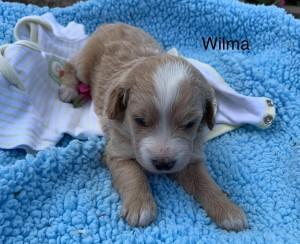 Marissa Reserved Wilma
