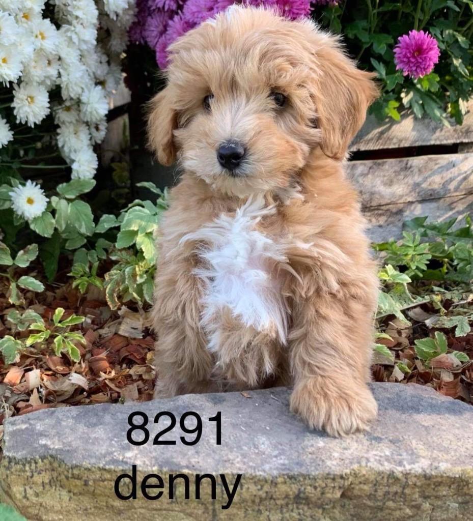 Rebecca Reserved Denny