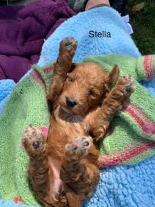 Jaclyn Reserved Stella