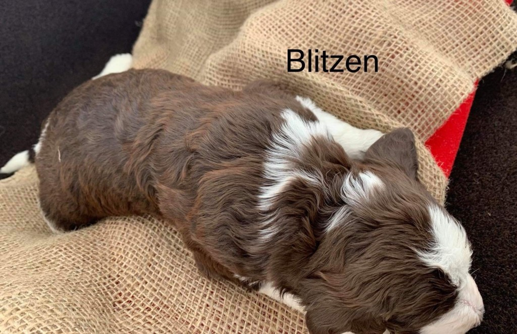 Blitzen is Reserved for Engrish