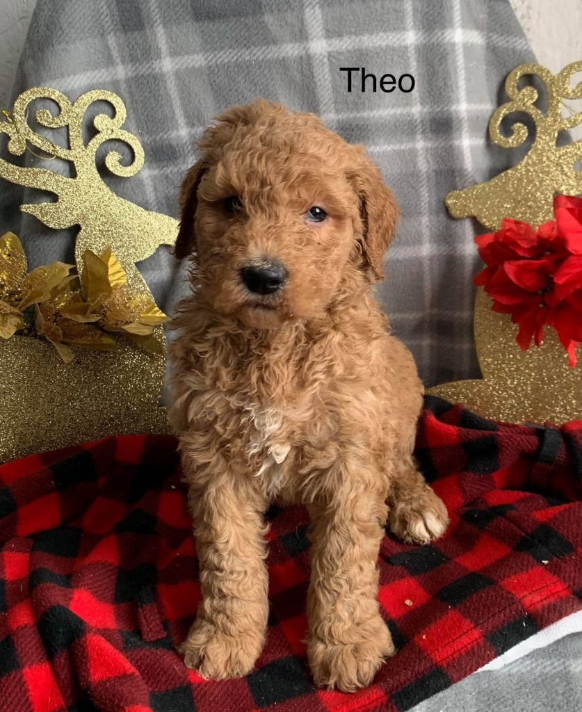 Theo is reserved for Lenny