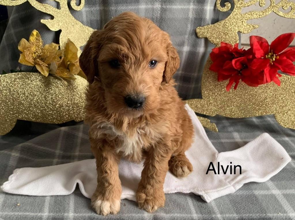John Reserved Alvin