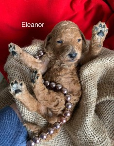 Eleanor is Reserved for Jason