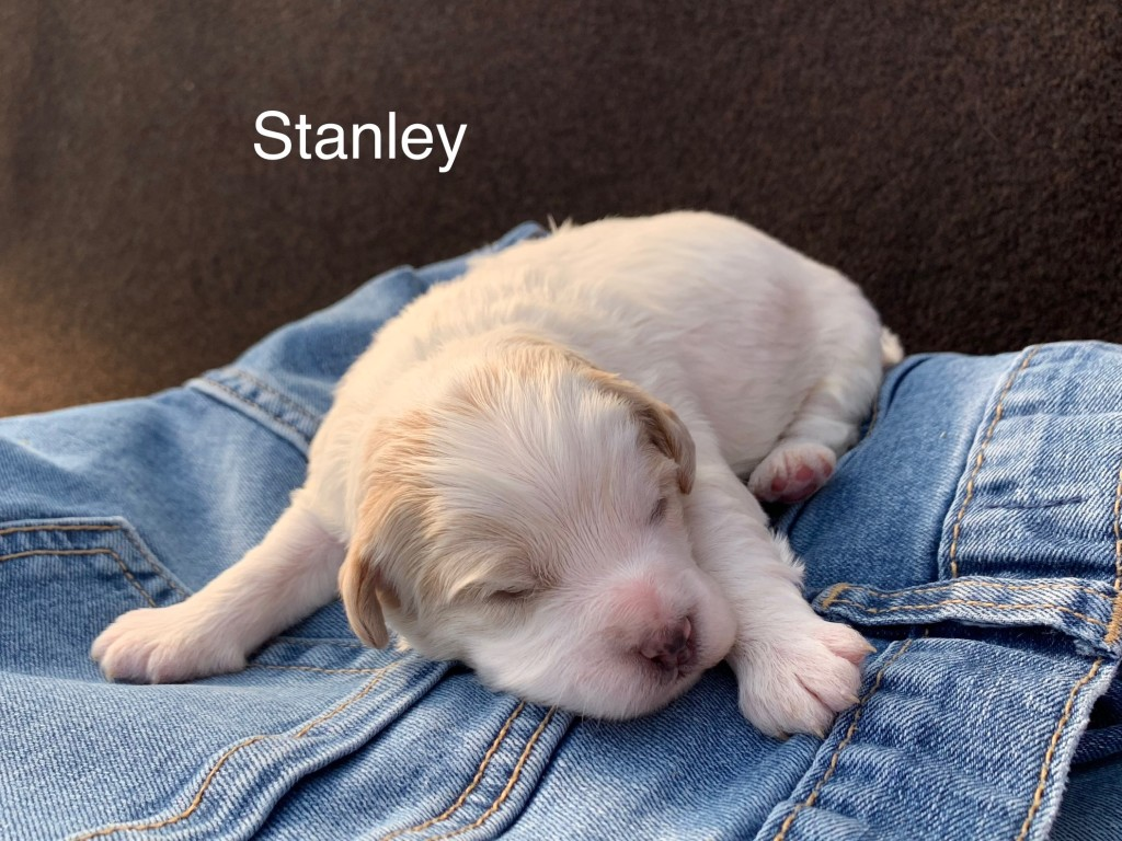 Cecile Reserved Stanley