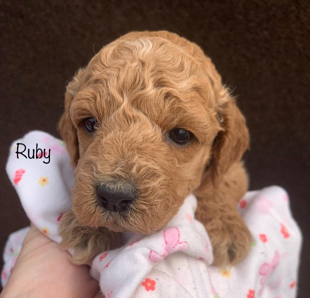 Elizabeth reserved Ruby